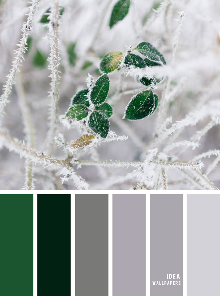 Winter color palettte - grey and green color combos #color #winter #inspiration