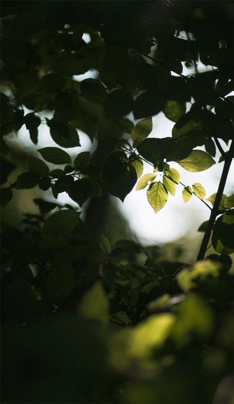 Sun shining through green leaves