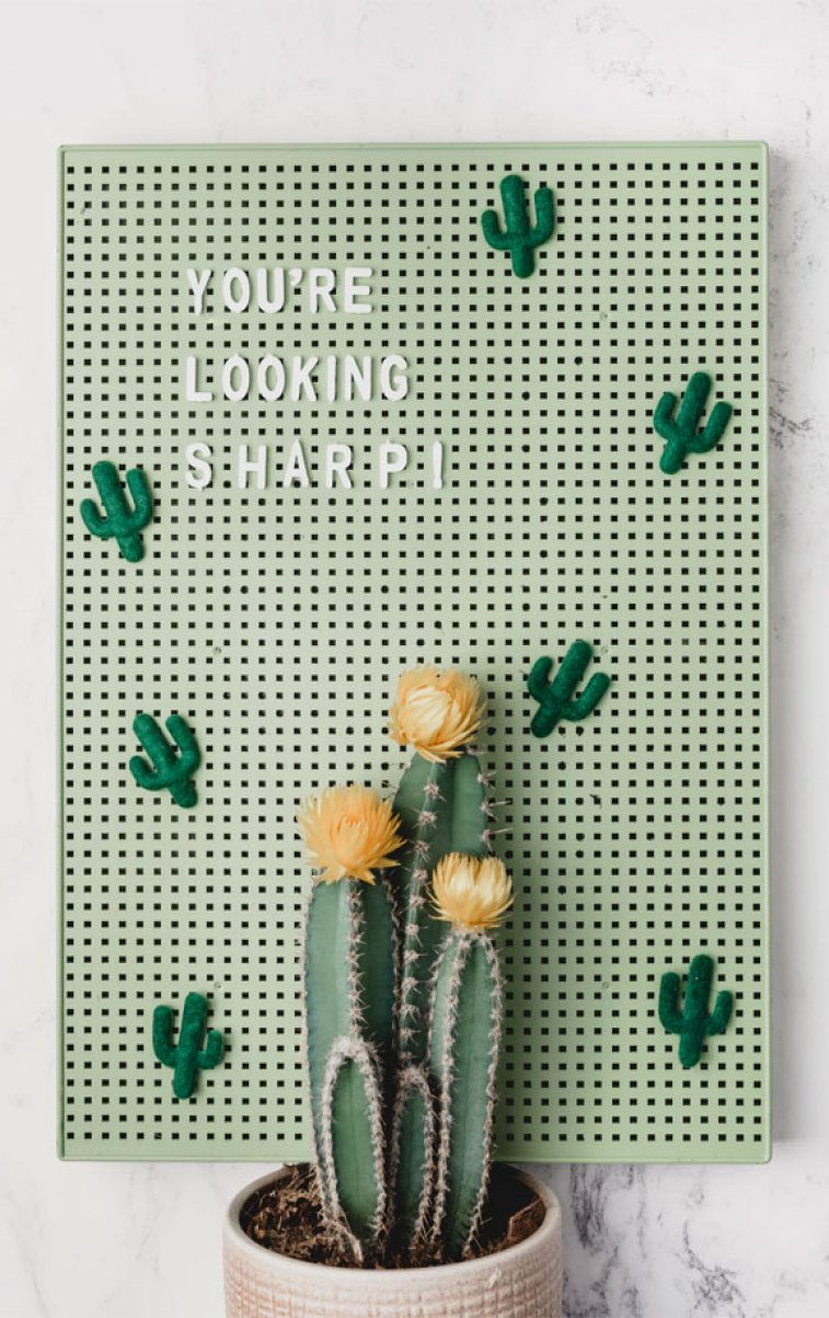 You're looking sharp! Cactus iphone wallpaper #green wallpaper