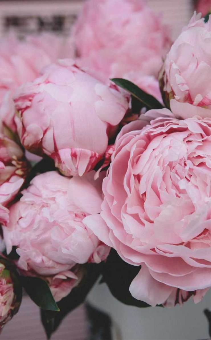 Love these 12 Very pretty iphone Xs wallpapers - floral iphone wallpaper #wallpaper flower iphone wallpaper #background #iphonexs
