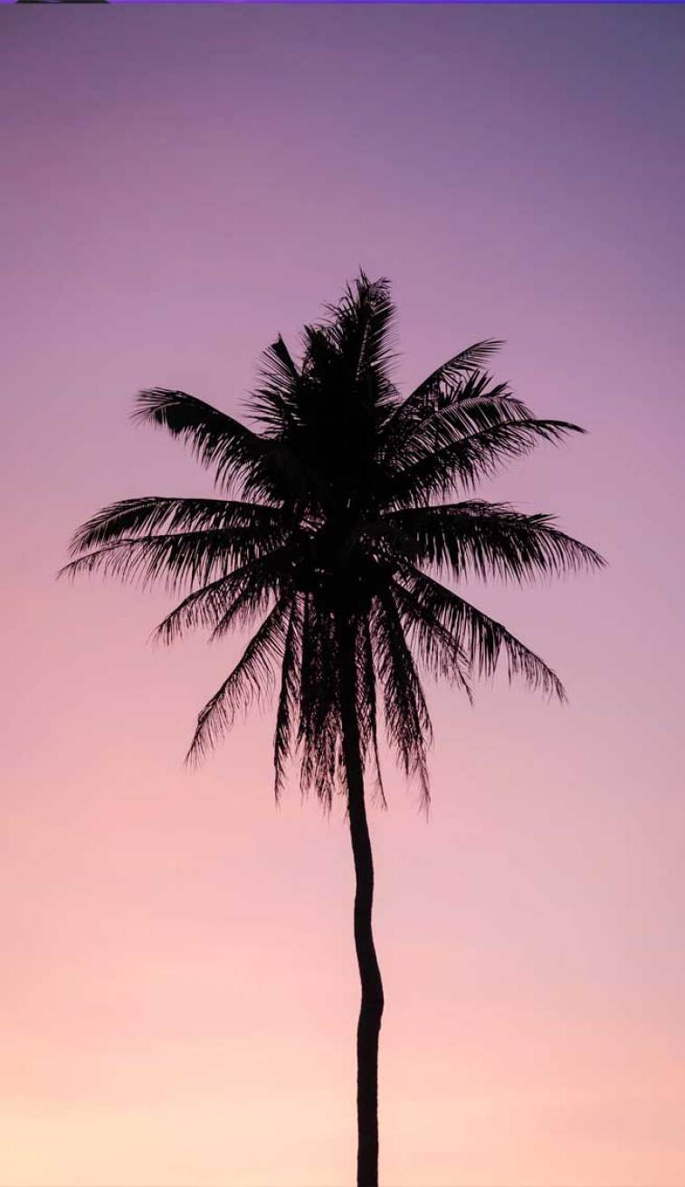 Beautiful pink mauve sky , coconut tree #wallpaper #sky