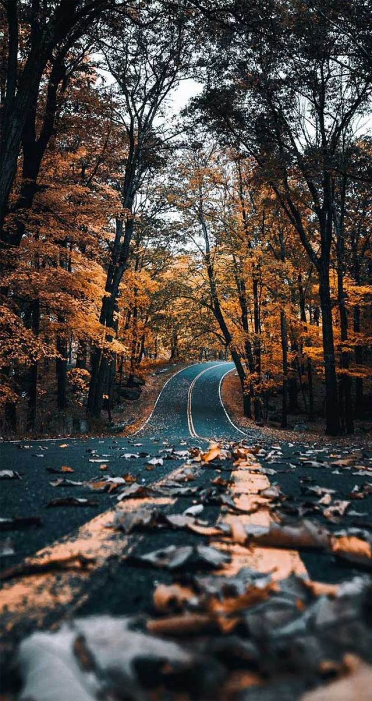 22 beautiful autumn images, autumn images free, fall images, beautiful pictures of autumn season, fall pictures ideas, autumn pictures wallpaper, fall scenes #fall #autumn #autumnimages