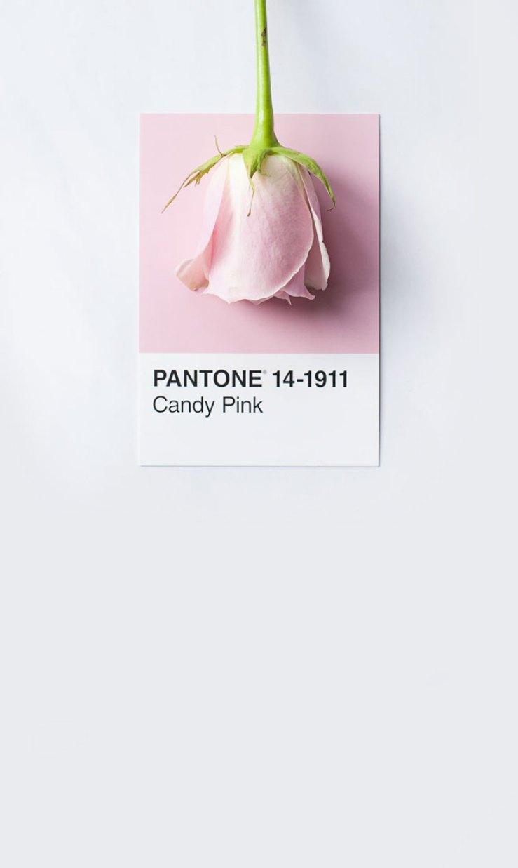 color palette , color inspiration, candy pink pantone 14-1911 #pantone #color