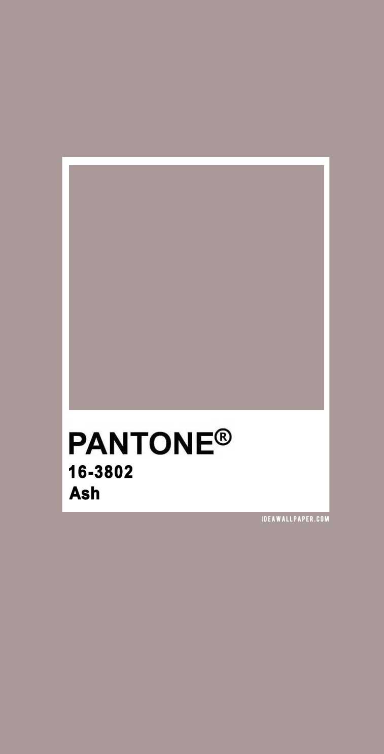Pantone 2020 Spring/Summer : Ash 16-3802, pantone 2020, ash pantone color, pantone color #colors