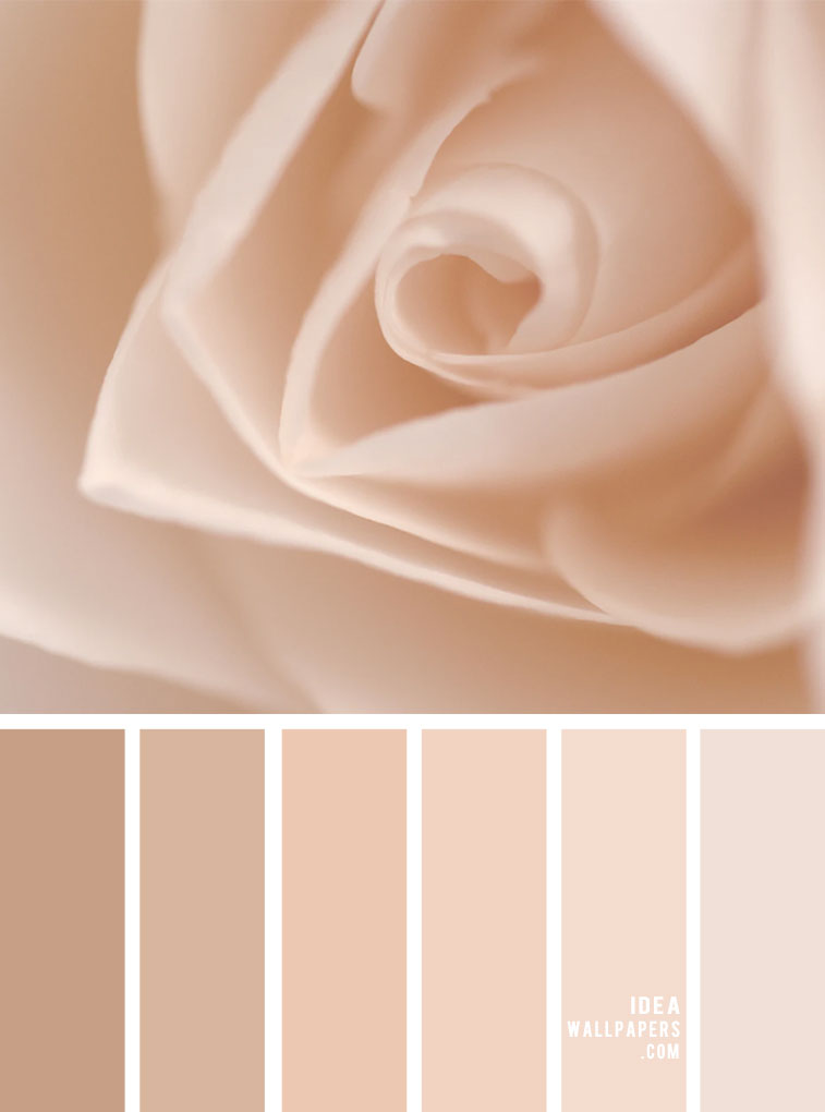 blush , vanilla, blush and linen color palette, color inspiration, mood board, blush color, linen and blush, blush color ideas #blush #colorpalette
