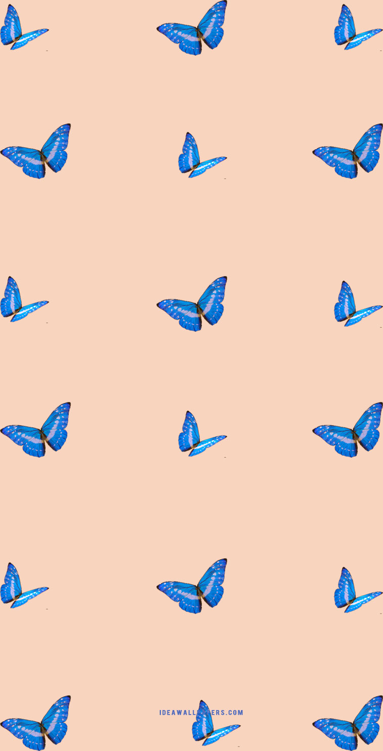 butterfly on light peach background idea wallpapers iphone wallpapers color schemes butterfly on light peach background