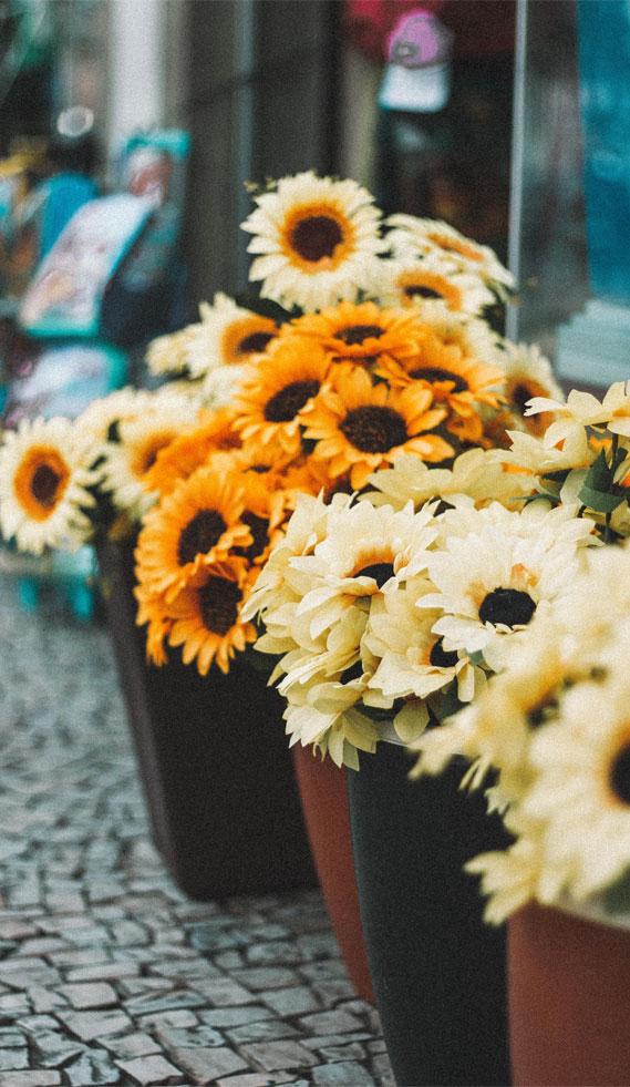 sunflowers, sunflower lockscreen,  locks screen, iphone wallpaper, butterfly and flowers iphone wallapaper, iphone lockscreen, iphone background #iphonewallpaper #lockscreen