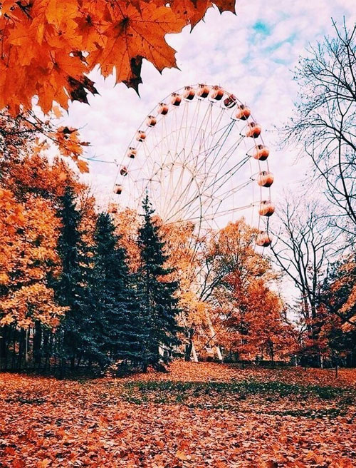 Autumn Aesthetic Big Wheel With Autumn Leaves Idea Wallpapers Iphone Wallpapers Color Schemes