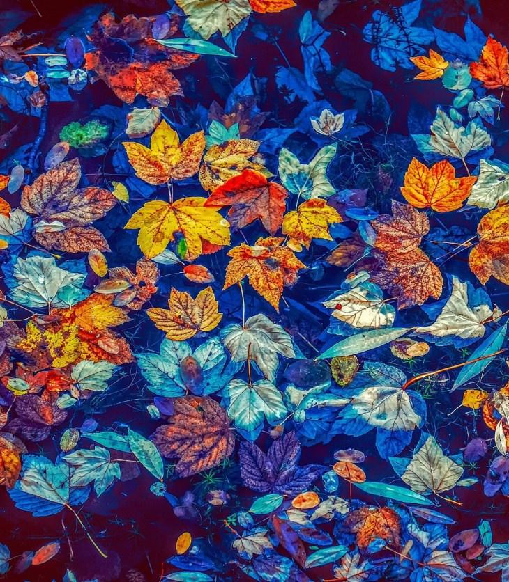 kolorowe liście