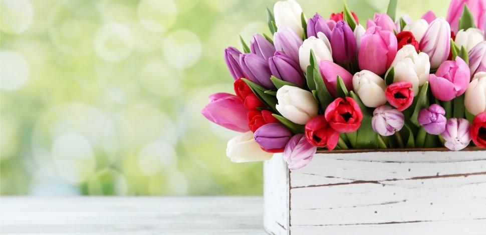 I fiori di Febbraio  Creando Idee