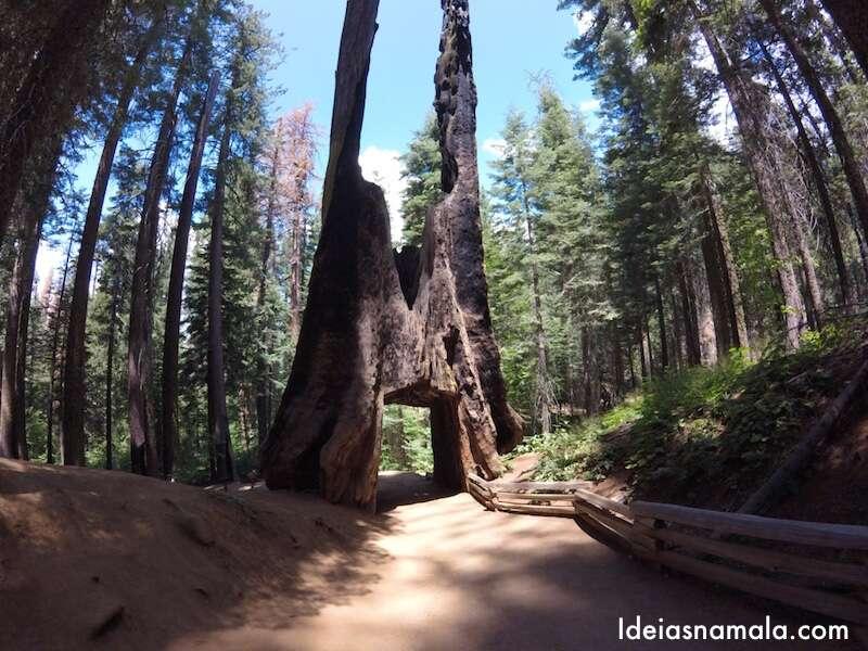 Toulumne Grove - Yosemite