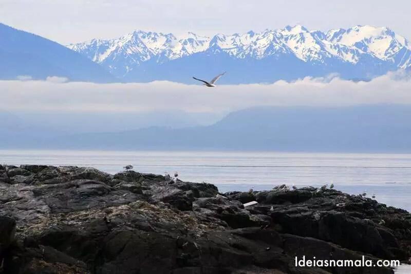 Tour para observação de orcas e baleias