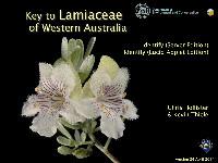 Lamiaceae_thm