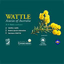 Wattle: Acacia of Australia