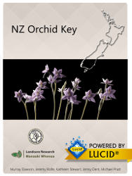 NZ Orchid Key