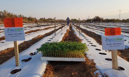 SaliCrop, LA FIRME ISRAÉLIENNE trouve une solution à salinité des terres AGRICOLES