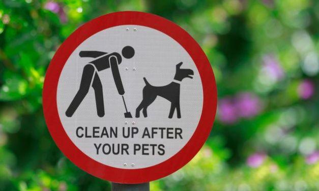 la Ville de Tel Aviv va analyser les crottes de chien pour pénaliser les maîtres négligents