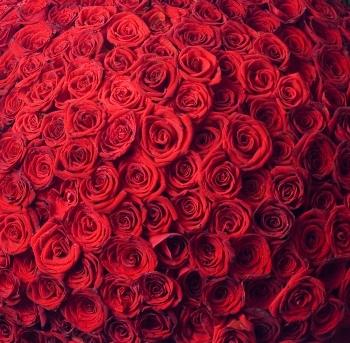 Pusheen Fall Wallpaper Seven Hundred Thousand Roses 171 Brave Fish