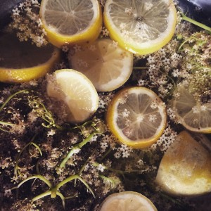 elderflower_cordial-300x300