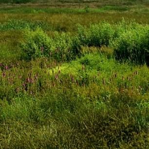 wetlands-500x500
