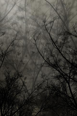 Zendha Abstract Iphone Wallpaper Tree