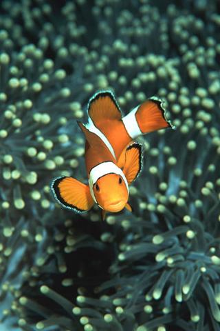 Cute Fish Iphone Wallpaper In The Water Iphone Wallpaper Idesign Iphone