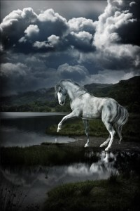Beautiful Horse iPhone Wallpaper