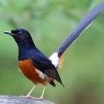 Bisnis Penjualan Burung Menggeliat Lagi, Tapi Kini Ramai di Online