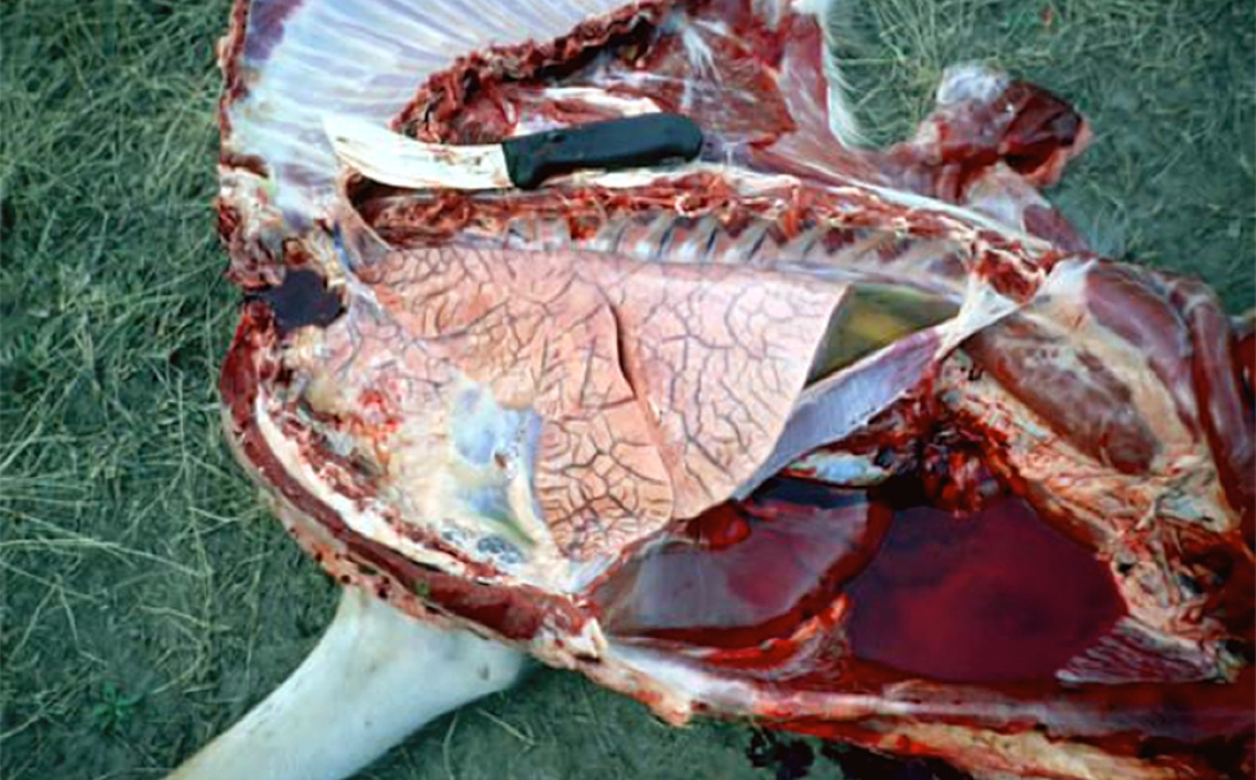 Epizootic Hemorrhagic Disease Idaho Fish And Game
