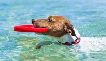 προστατεύσετε τον σκύλο σας από τη ζέστη