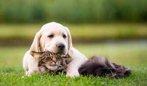 How to Keep Your Dog or Cat Healthy – Blog – iHerb