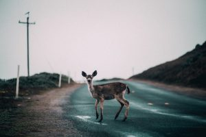 Don't Let Your Hands Hang Limp- Overcoming Fear – Pursuing Disciple Making Movements in the Frontiers