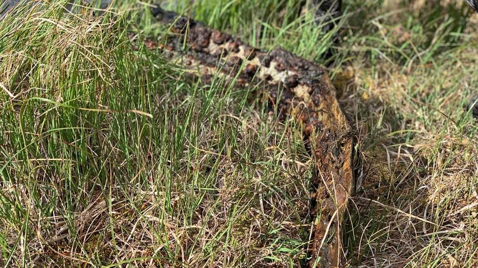 Sea Vixen parts on Dartmoor