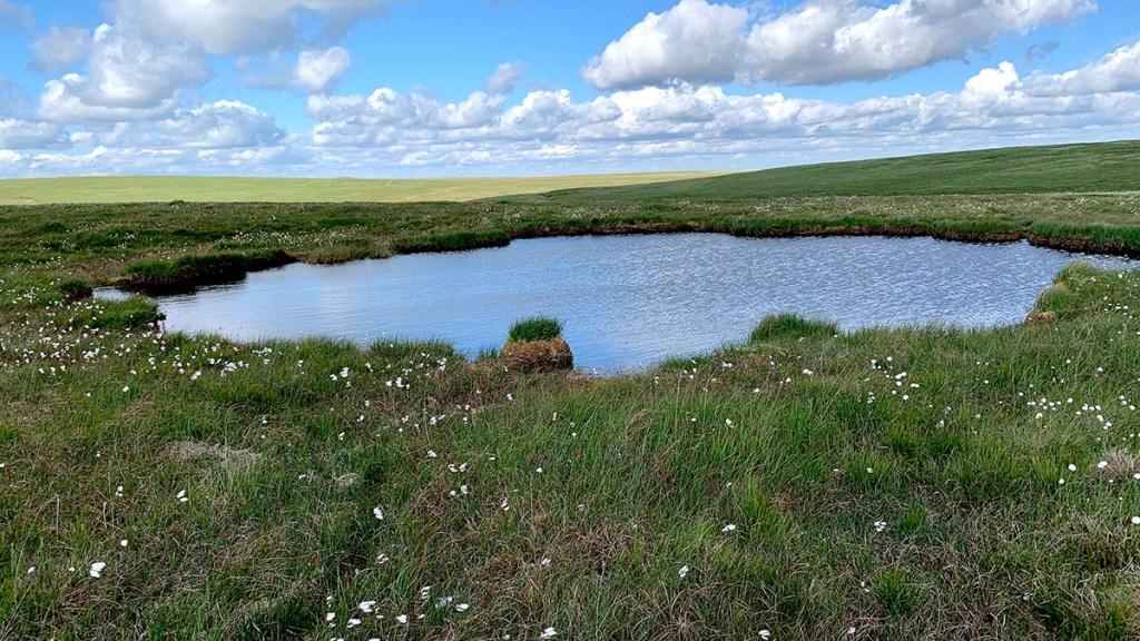 Sea Vixen pond on Flat Tor
