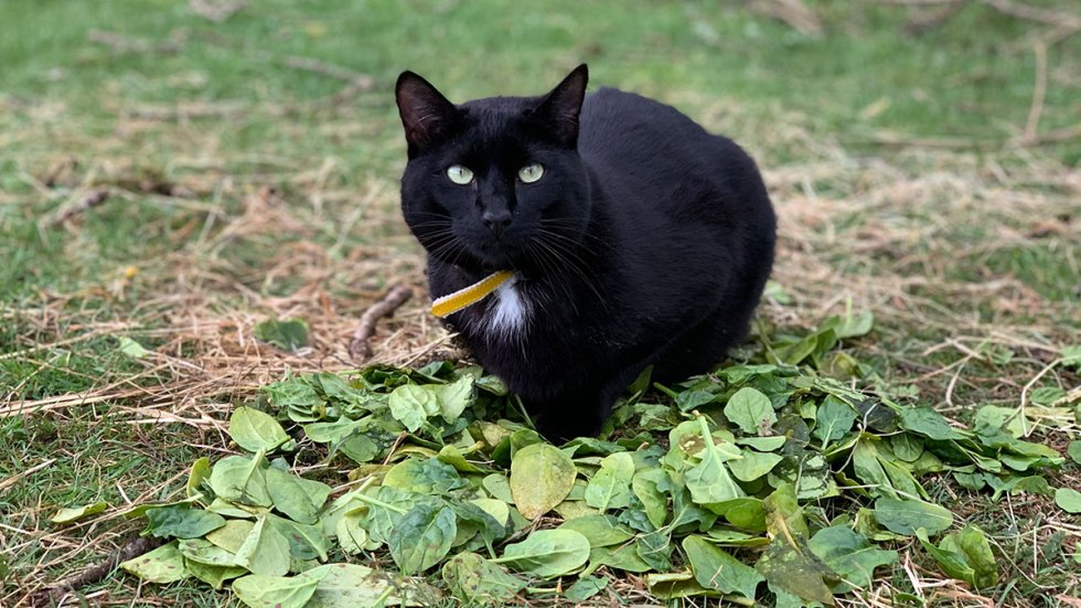 He's just a cat with spinach leaves