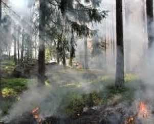 Smoky trees in forest fire