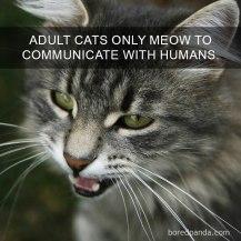 cat-facts-34-593ffae667053__700