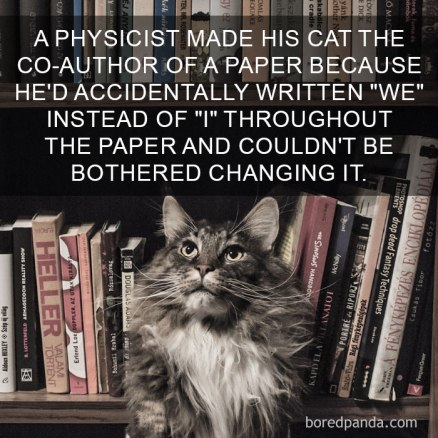 cat-facts-4-593ffa9da207b__700