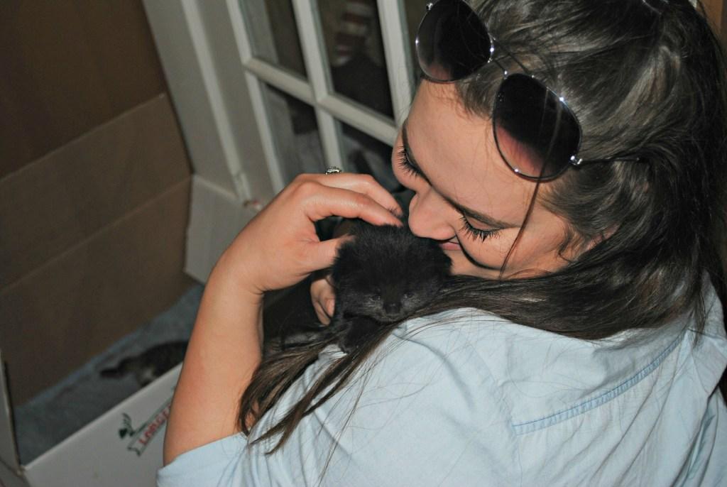 kitten cuddles updated