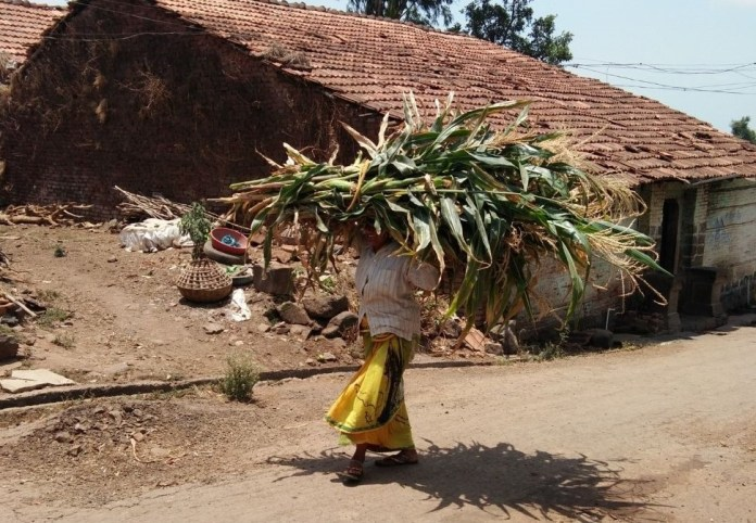 Women carrying firewood labour