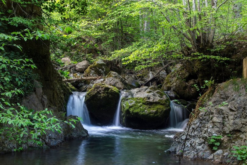 Yenice Ormanları is a unique forested region that has a wide diversity of flora and fauna. (Shutterstock Photo)