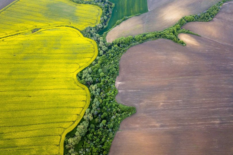 The vibrant yellow color of a canola flower field shines on a beautiful day,Tekirdağ, Turkey. (Shutterstock Photo)