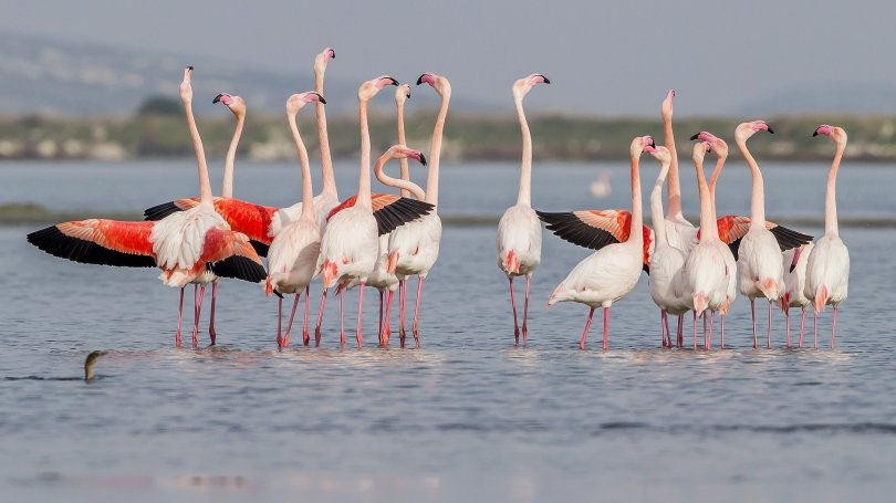 Gediz Delta is home to approximately 10% of the world's flamingo population.