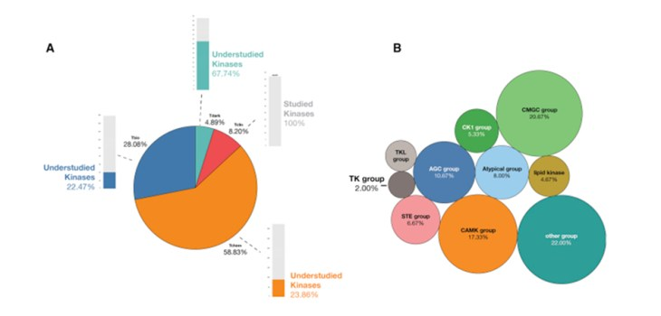 """Figure 1 Overview of Kinase TDLs (A) There are 634 kinases annotated on Pharos. In total, 8.2% are considered Tclin, and 151 of 634 are considered """"understudied""""; these represent kinases that bear Tdark, Tbio, and Tchem annotations. (B) Certain groups of kinases are historically understudied. The CMGC group, CAMK group, and """"other"""" group kinases are enriched for understudied kinases, while TKs have been extensively explored."""
