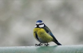 Capturing the little birds outside has also become a new passion!