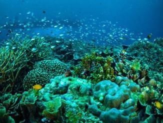 Tempat Wisata Populer di Manado