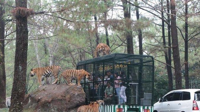 Pesona Taman Safari Prigen