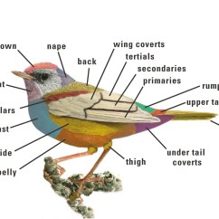 External Grasshopper Diagram 6 Pin To 7 Trailer Wiring Indian Roller Or Neelkanth  Free Thoughts By Ranjit Singh