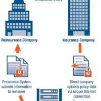 Application of Reinsurance to Various Branches of Insurance