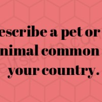 Describe a pet or an animal common in your country